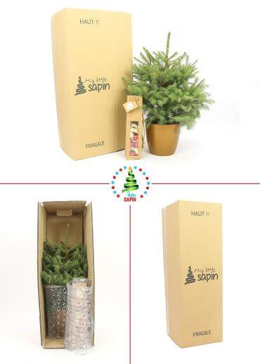 Sapin sans décoration - Sapin naturel en pot